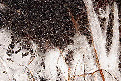 A snowy blizzard scene is pictured within the ice.