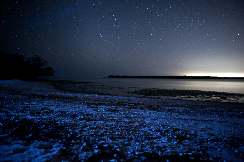 Bioluminescence is the production and emission of light by a living organism.  Bioluminescence is a naturally occurring form of chemiluminescence where energy is released by a chemical reaction in the form of light emission.  Bioluminescence occurs in marine vertebrates and invertebrates and also in microorganisms.
