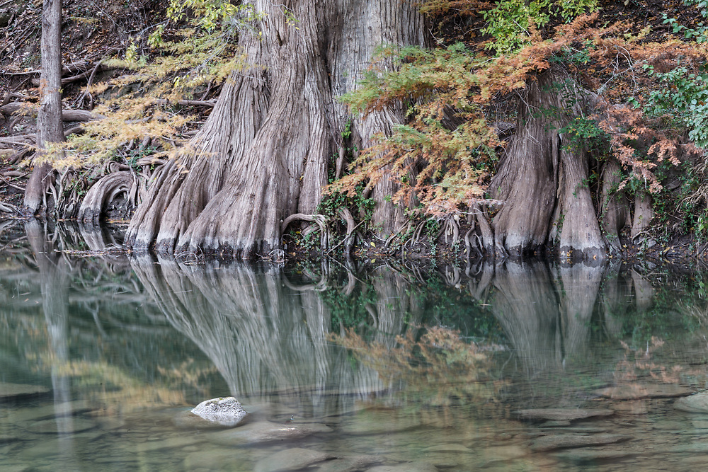 Trees in fall color, James Kiehl River Bend Park, Guadalupe River near Comfort, Texas USA