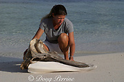 researcher Diane Claridge with skull of Cuvier's beaked whale, Ziphius cavirostris, that stranded on Great Abaco Island, Bahamas shortly after U.S. Navy exercies using mid-range sonar, Sandy Point, Great Abaco, Bahamas  MR 320