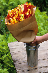 Conditioning tulips - swaddling<br /> Wrapping in paper