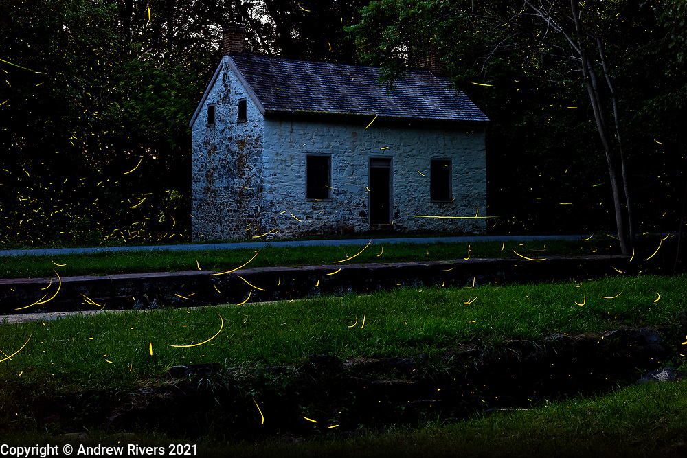 Fireflies have returned for the summer. Lock 27