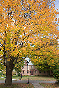 Fall colours of Maple tree - Acer saccharum and woman walking dog by traditional New England house in Vermont, New England, USA