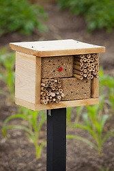Bee and insect box / house placed in garden to encourage pollinators
