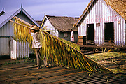 Informal housing wooden shacks built on timber logs known as the Floating City, Manaus, Brazil 1962 - man with palm fronds for roofing material