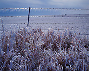 Ice storm coating grass and barbed wire fence near Osage City, eastern Kansas.