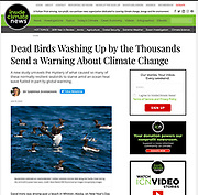 Inside Climate News: Dead Birds Washing Up by the Thousands Send a Warning About Climate Change