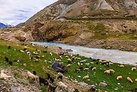 A herd of sheep and goats, Leh-Manali Highway, Himachal Pradesh, India.