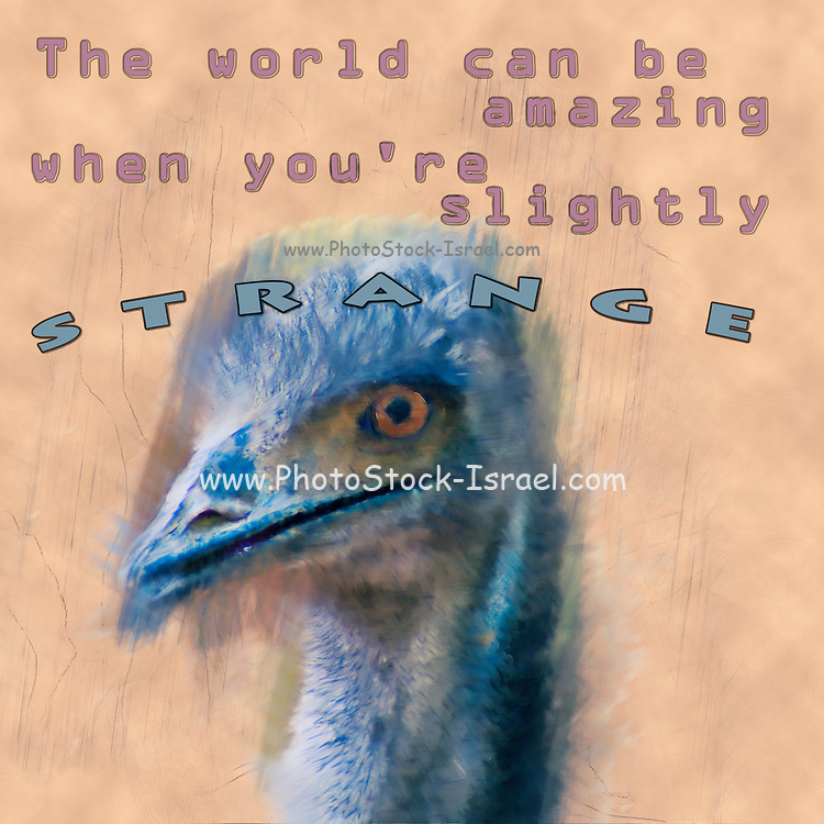 Famous and humourous quotes series: The world can be amazing when you're slightly strange with a closeup of the head of an Emu (Dromaius novaehollandiae) the largest bird native to Australia