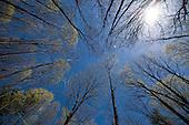 Wells State Park, Sturbridge, MA