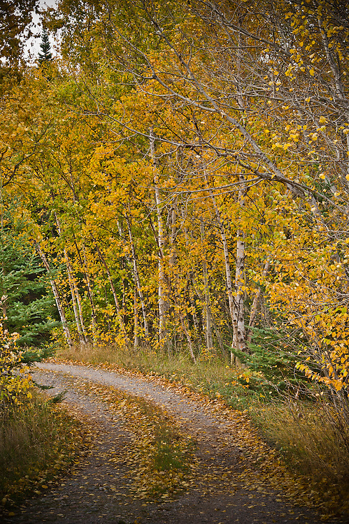 Fall color along a two track road.