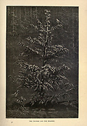 The Fir-Tree and the Bramble from AEsop's fables Illustrated by Joseph Benjamin Rundell, and published in London and New York by Cassell Petter and Galpin in 1869