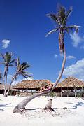 tourist relaxes in a palm tree, Hotel Club Akumal Caribe, Akumal, Yucatan Peninsula, Mexico ( Caribbean Sea / Western Atlantic Ocean ) MR 117