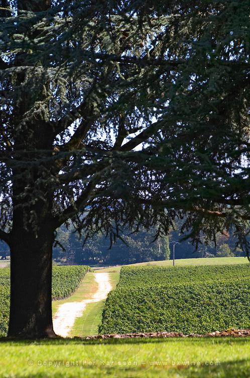 A view over the garden and vineyard with an enormous cedar tree - Château Pey la Tour, previously Clos de la Tour or de Latour, Bordeaux, France