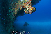 bow of the wreck of the Biscayne, Miami, Florida, USA<br /> ( Western Atlantic Ocean )