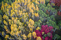 Early Fall colors create a kaleidoscope of colors in Wasatch Mountain State Park in Utah.