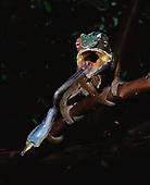 Madagascar Herps