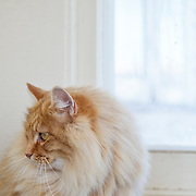 20120330 Cats for Will