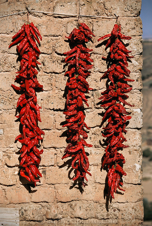 Hanging dried red peppers. Ausejo, La Rioja, Spain.