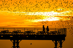 © Licensed to London News Pictures. 30/10/2017. Aberystwyth, UK. Two birdwatchers standing at the end of the pier get a close up view of the thousands of tiny starlings flying and swooping  in  ëmurmurationsí of intricate patterns in the sky as the suns sets over the sea in Aberystwyth,  before descending to roost for the night underneath the townís seaside pier at dusk . . Photo credit: Keith Morris/LNP