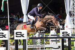 Whitaker Michael, GBR, El Wee Widge<br /> Stephex Masters 2018<br /> © Hippo Foto - Sharon Vandeput<br /> 31/08/18