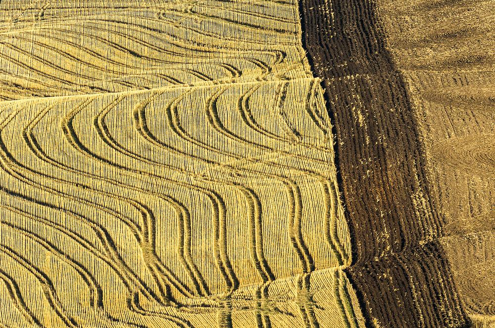 Palouse Hills wheatlands, October, WA, USA