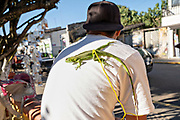A young man sits with his pet lizard sunning on his back in the central historic district of Coatepec, Veracruz State, Mexico.