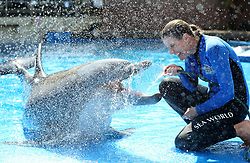 South Africa - Durban - 17 September 2020 - Coronavirus - Lead animal behaviorist Kelly<br /> de Klerk getting ready for the Summer season and the opening after lockdown with 36 year old Kelpie the dolphin who was the first dolphin to be born at the old Seaworld <br /> in 1984.<br /> Picture: Shelley Kjonstad/African News Agency(ANA)
