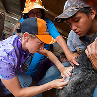 072213        Brian Leddy<br /> Becky Lutter draws blood from a sheep with the help of Shaneford Kady at a farm near Churchrock Friday. University of Tennessee students and Navajo Technical College students spent part of the week vaccinating and deworming area animals.