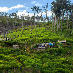 Fea0093883. DT News.Tananarive a mining village near AMBATONDRAZAKA,The Ankeniheny-Zahamena Corridor, Madagascar.Pic Shows miners homes occupy an area where trees once grew beforew the miners arrived from all over Madagascar looking for sapphires in the village of Tananarive