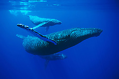 Humpback Whale Baby