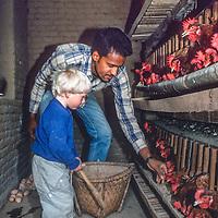 Shanat Kumar Risal helps Ben Wiltsie collect eggs at his farm in the Kathmandu Valley, Nepal, 1986.