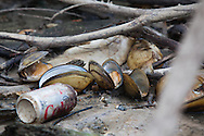 Dead mussels part of the fish kill in gg Pearl River in St. Tammany Parish Louisiana caused by a spill/ discharge from the Temple-Inland paper mill in Bogalusa made up of a mixture of pulp and unspecified chemicals that turned the river black  killing fish, shellfish and turtles along 40 miles of the river. The chemicals released into the river depleted oxygen levels which caused the fish kill in the river and its' many tributaries. Clean-up crews were dispatched on the Aug. 18th to remove the dead fish before they sink depleting the waterway of more oxygen causing an even larger environmental disaster.