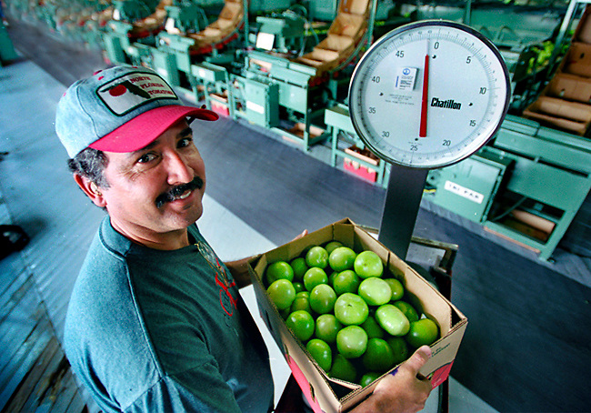 Supervisor at Fulton's Tomato Factory weighs a carton of tomatoes for shipping.  Photographed for Bank of America.