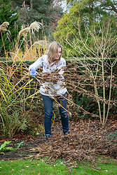 Clearing borders. Cutting down veronicastrums in winter.