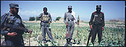 Afghan police stand in a poppy field during the drug eradication program in Jalalabad.