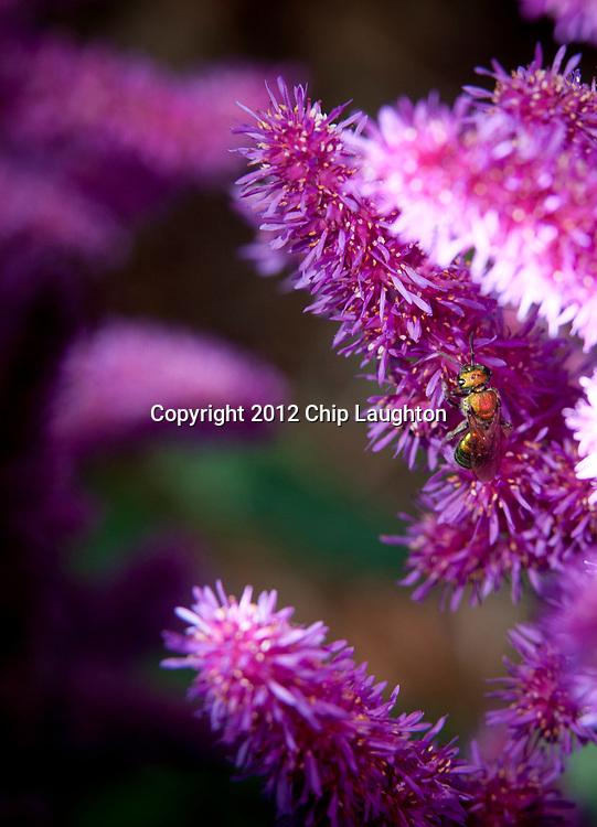 wildlife stock photo image