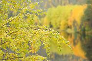 Oulanka River, Finland.