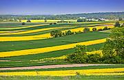 2013-05-16. Zamojszczyzna, krajobraz w okolicach Zamościa