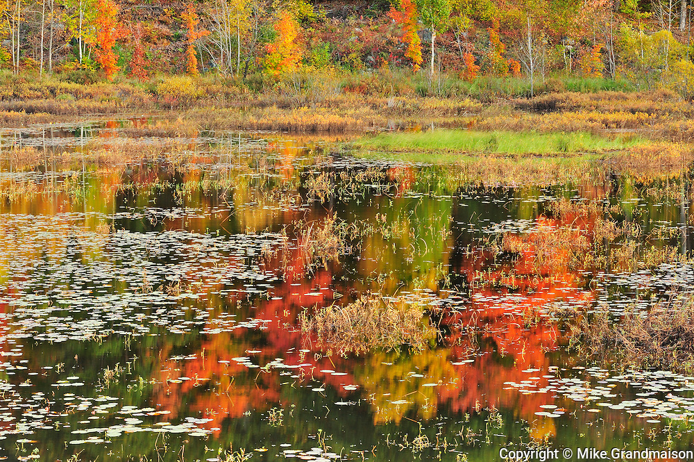 Reflection of autumn colored trees in pond<br /> Minden<br /> Ontario<br /> Canada