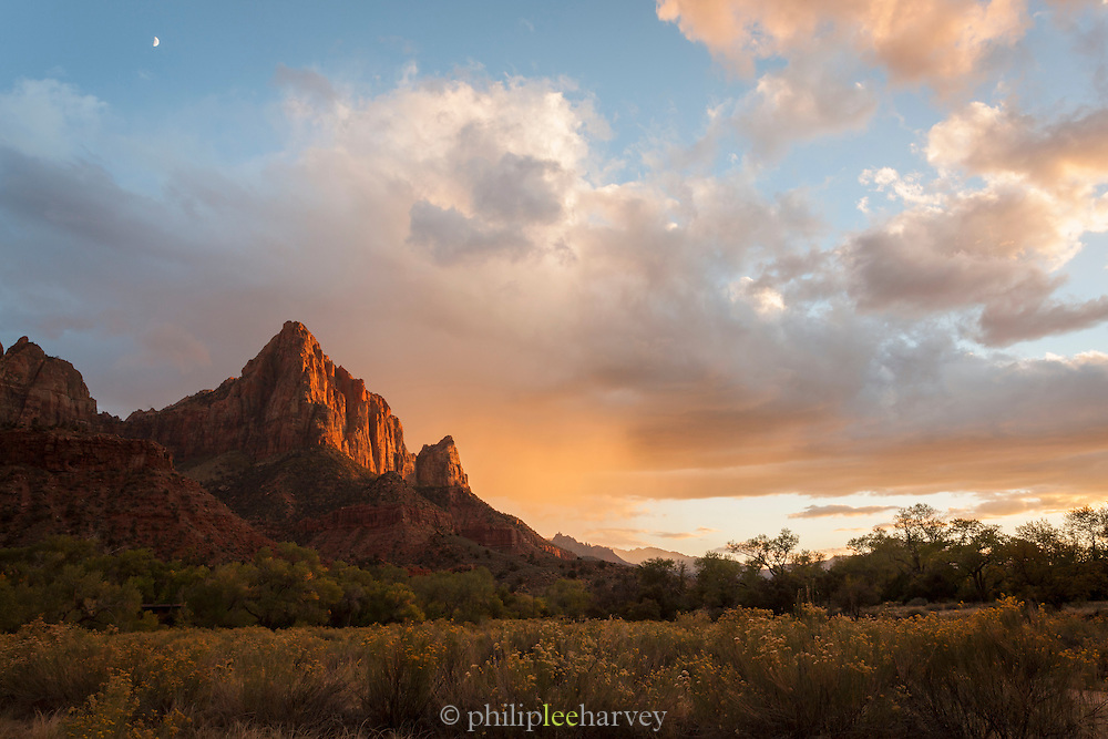 Roadside view in Zion National Park Utah, United States of America