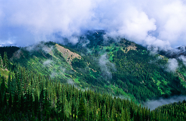 Clouds drifting over Hurricane Hill.  Olympic National Park,  Washington.