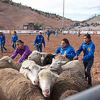 Gallup Leo's club trying to lead sheep out of the arena after the wooly riding competition Wednesday, June 12 at Red Rock Park during the Gallup Lions Club youth rodeo.