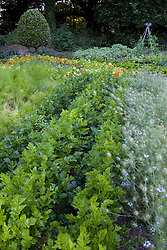The vegetable garden at Ballymaloe Cookery school