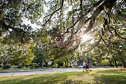 Sunlight shines through a mossy oak tree on the corner of Park Avenue and Windsor Drive making for a nice stroll through the Wilmington neighborhood for friends.  PHOTO BY: JEFF JANOWSKI PHOTOGRAPHY