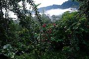 Ecuador, April 29 2010: Images from Río Canandé Reserve. Copyright 2010 Peter Horrell