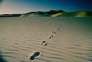 Footprints through the sand in the desert at Qatar