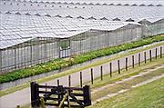 Nederland, Monster, 4-4-2012Kas, kassen in het kassengebied van het westland. Er wordt groente in gekweekt. Het gebied tussen Naaldwijk en de kust is belangrijk vanwege de tuinbouw. Hier liggen de kassen tussen de rand van de bebouwde kom en de duinen.Foto: Flip Franssen/Hollandse Hoogte