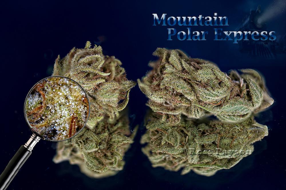 Mountain Polar Express shot in a professional photography studio.