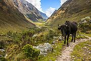 Santa Cruz trek - Santa Cruz River Valley, Andes, Peru
